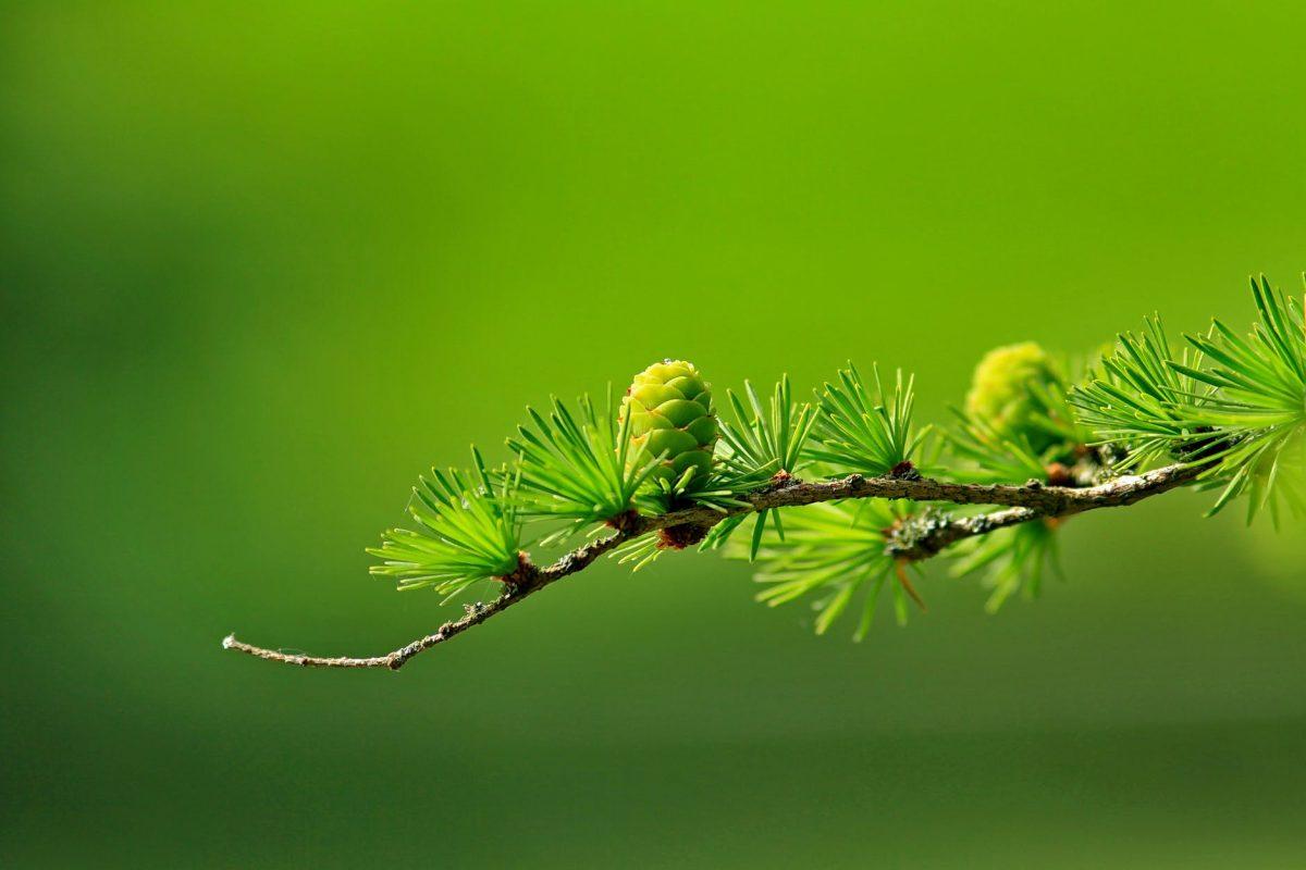 Nytt innehav: AuAg Precious Green